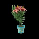 Midlands Compost - Red Flower in Blue Pot