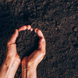 Midlands Compost - dirty woman hands holding dark moist soil agricult X2GLFZK scaled 300x300